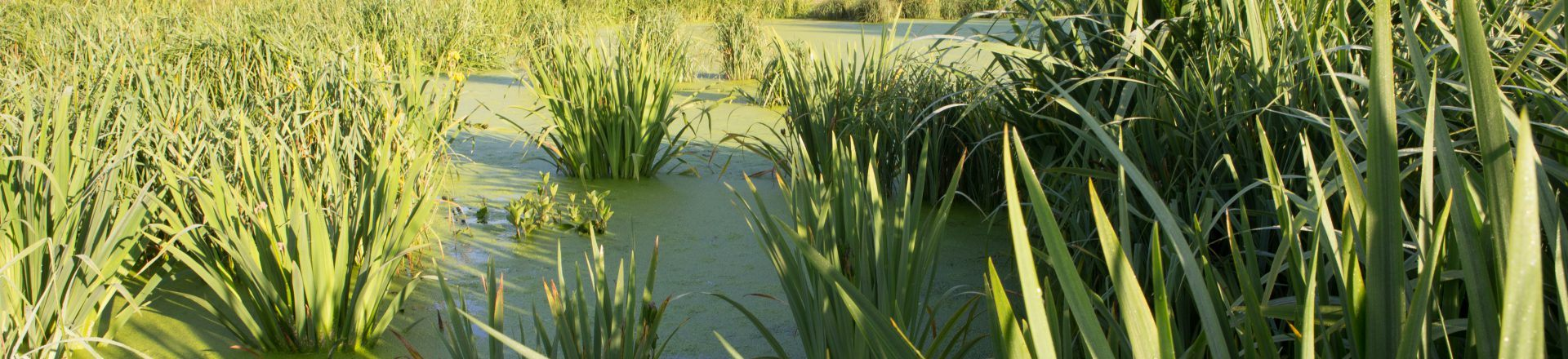 Frogshall wetland in Norfolk – a silent hero?