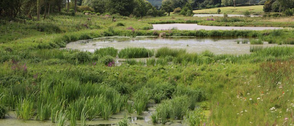 Join us at our Norfolk Rivers Trust Wetland Solutions Event *Ended*