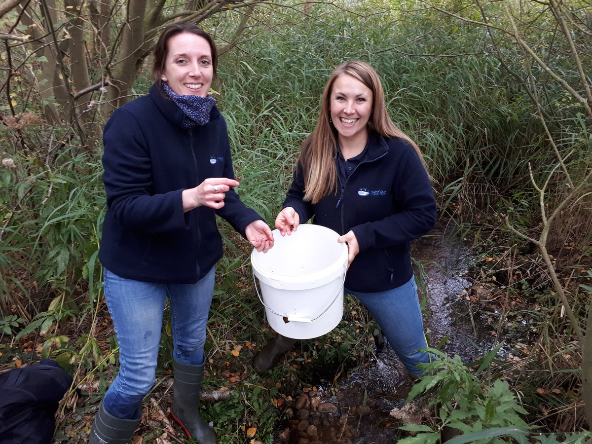 Safeguarding our native white-clawed crayfish