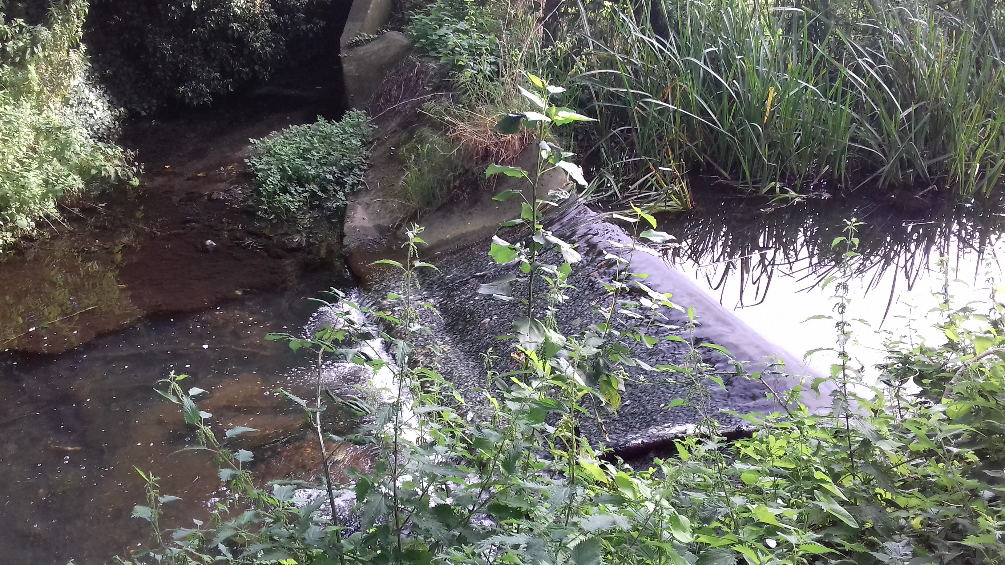 Tiffey weir removal: aiding fish migration along the river