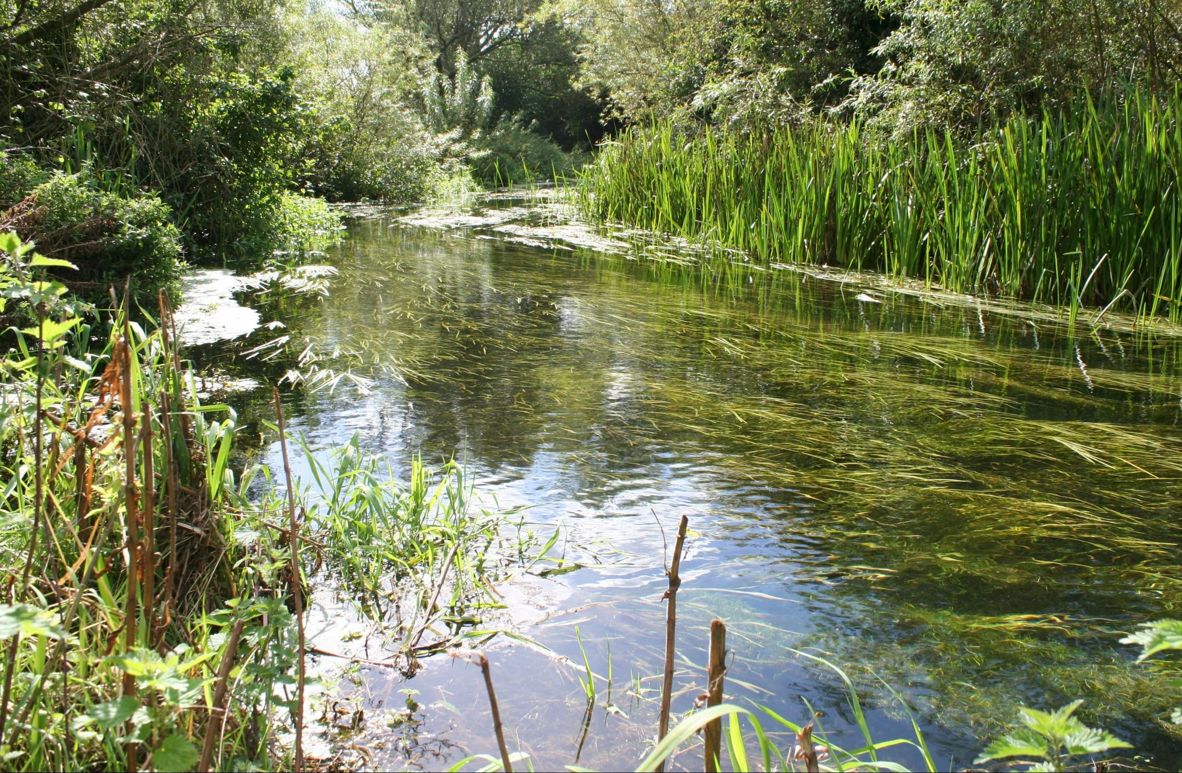How can you keep your river healthy and clean? Part 1: In-channel vegetation