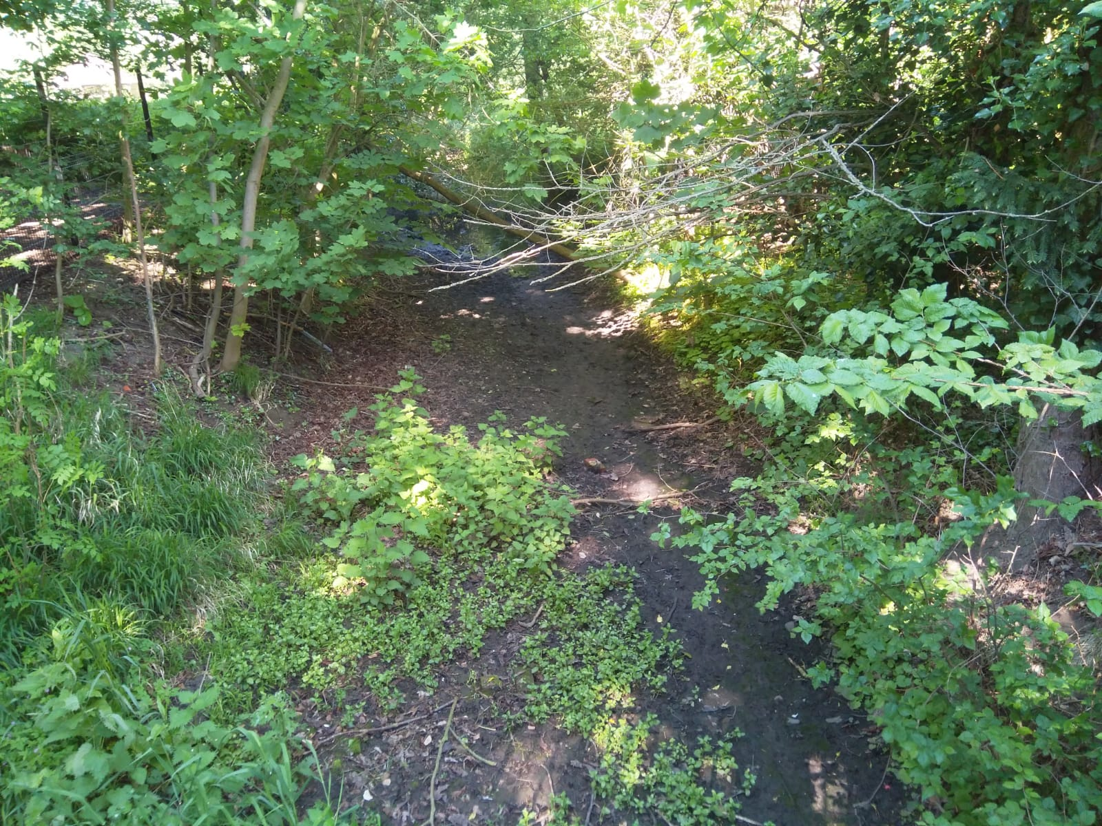 How can you keep your river healthy and clean? Part 3: Water use and pollution