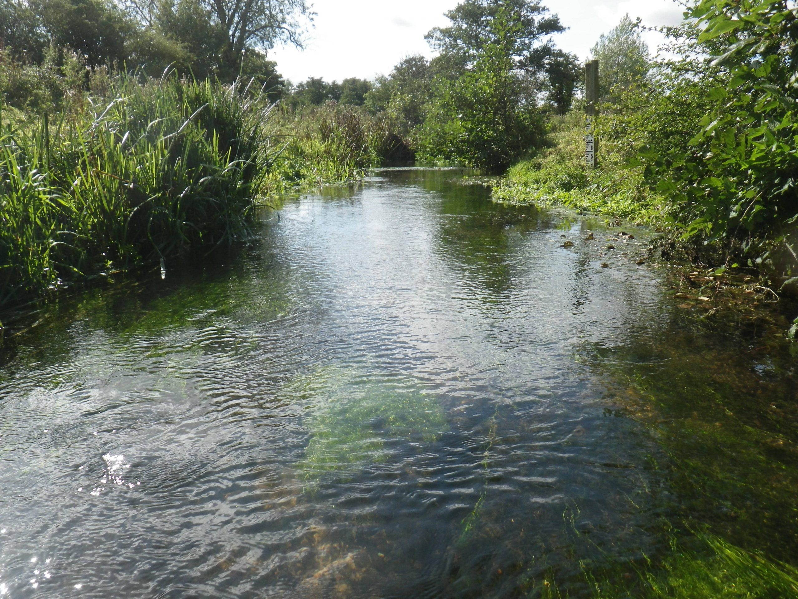 How can you keep your river healthy and clean? Part 2: Bankside management