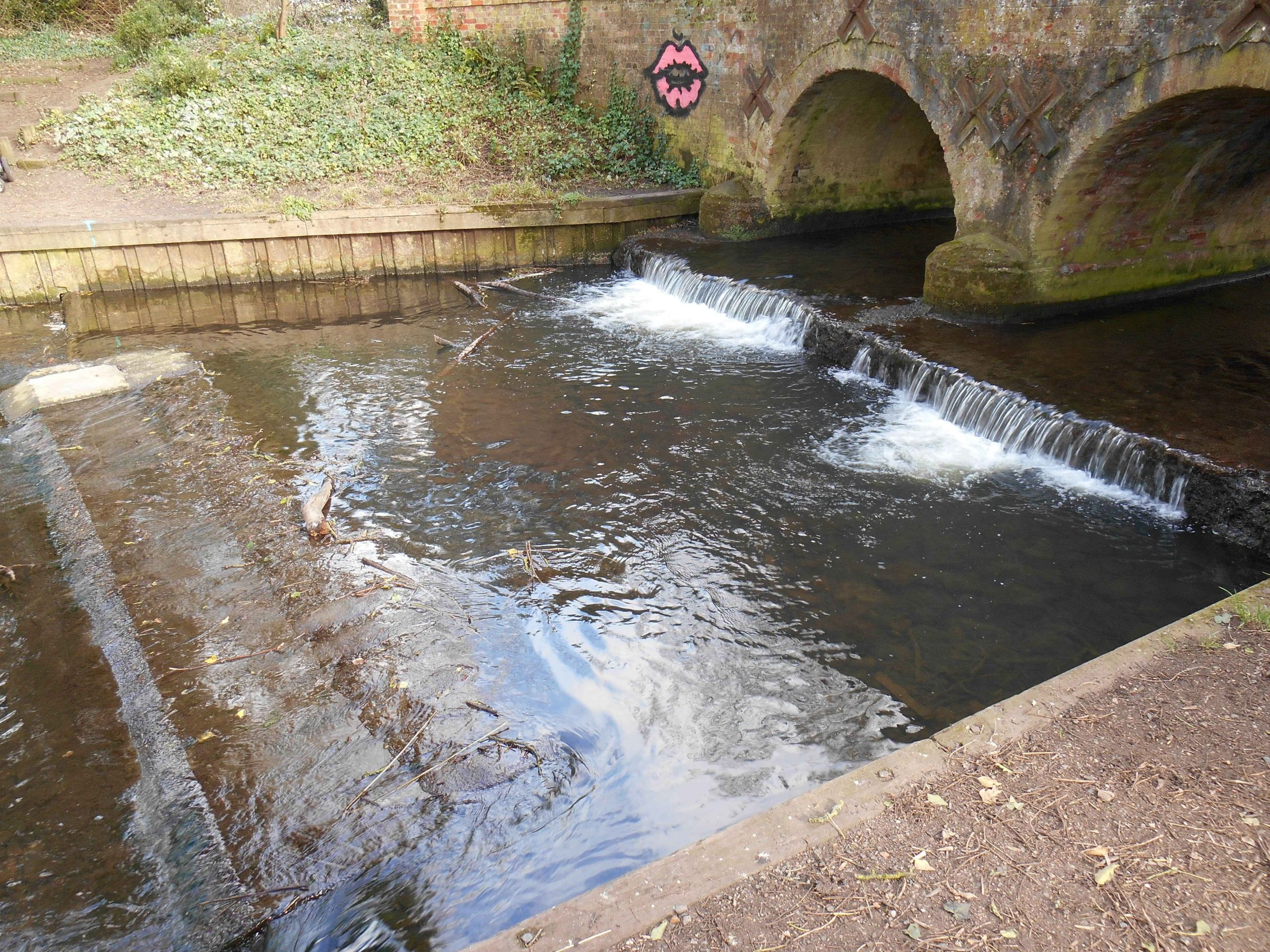 Flow free, River Tiffey – Happy World Fish Migration Day