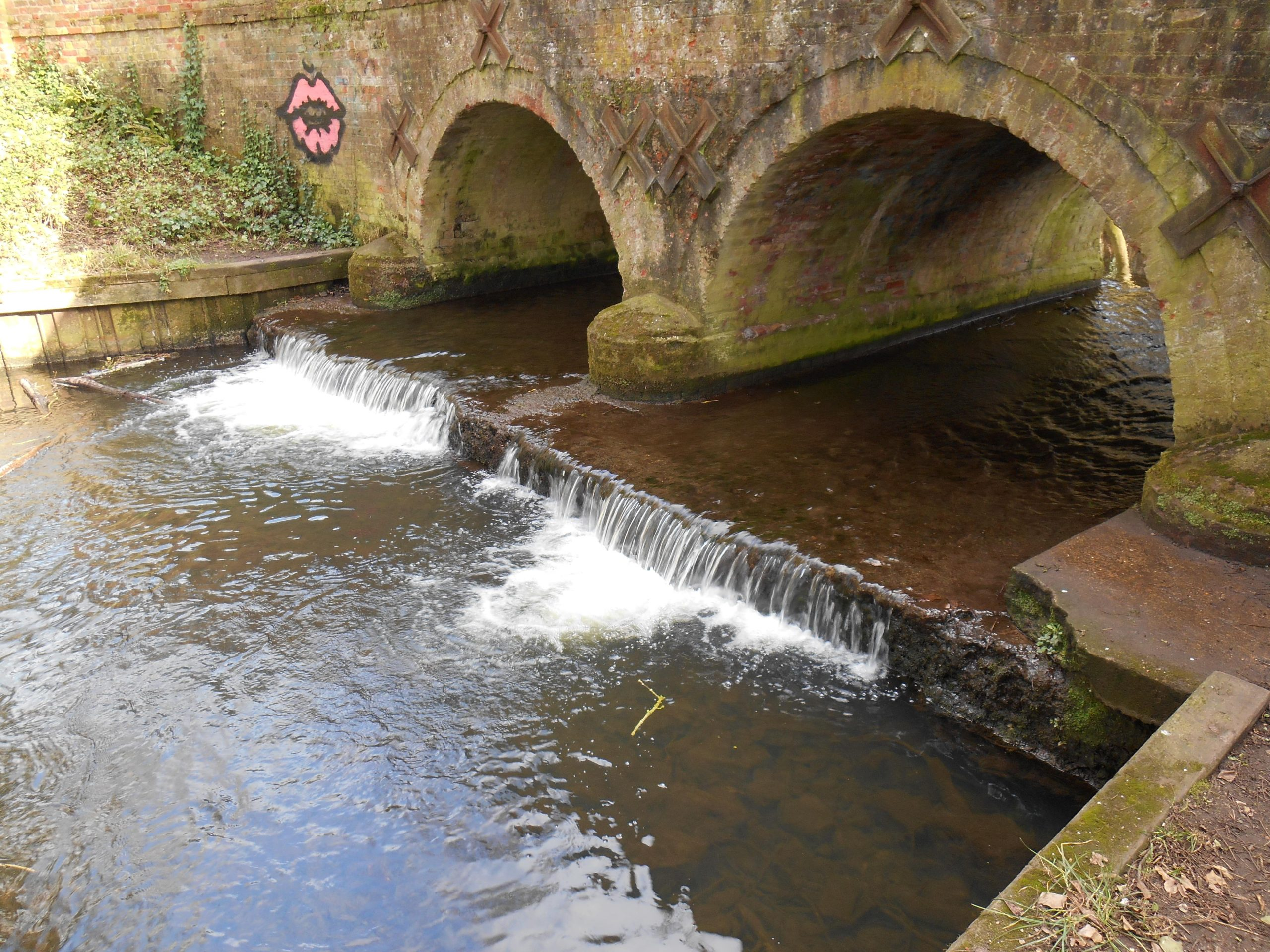 River Tiffey in Wymondham: Phase 2 of the work to improve fish passage begins