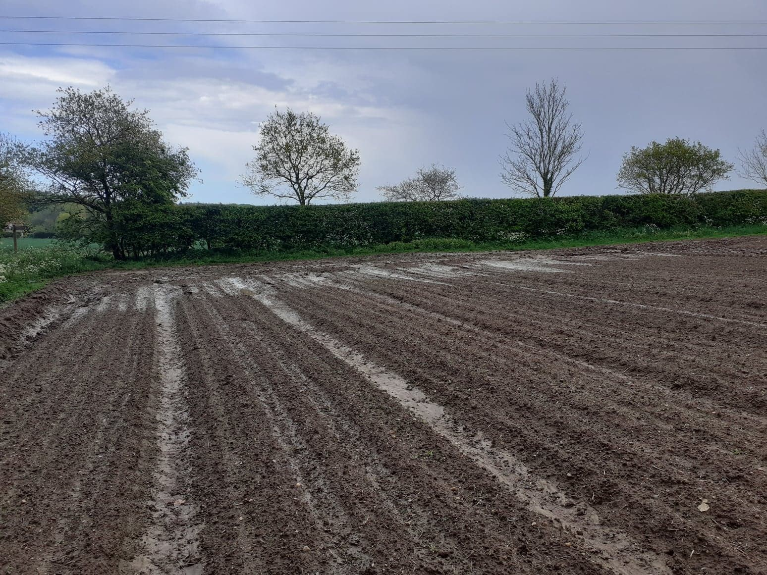 Slow crop germination coupled with heavy rainfall is a concern for water quality