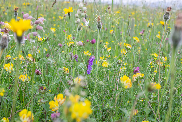 Pollinator Project in East Anglia: Invitation for proposals