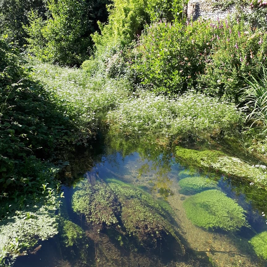 NRT receives £885,400 of Green Recovery Challenge Funds in significant boost for two chalk streams